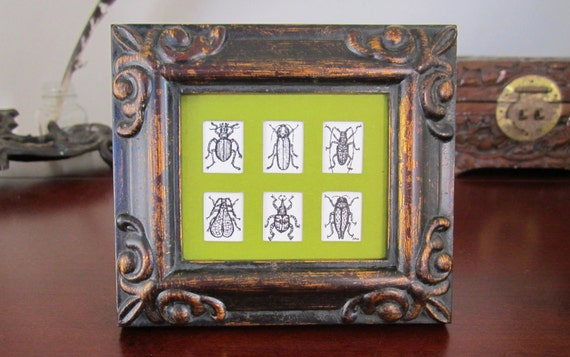 Reserved for Carol - Mini Beetles - Framed Insect Art Print - Tiny Bug Collection