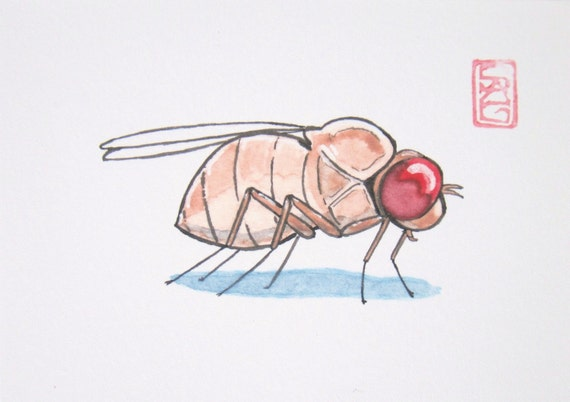 ACEO Her Majesty, Drosophila - Archival Print Insect Art
