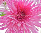 Pretty in Pink Flower -8x10