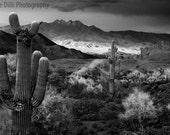 Photograph Four Peaks Az Black and White  Saguaro Cactus Sunset Fine Art  un-matted multiple sizes