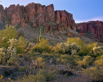 Photograph, Arizona Superstitions Mountains cactus, yellow, green Sunrise - Fine Art