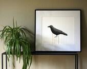 Crow Drawing- 8 by 10 black wildlife nature art - print of pastel painting