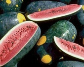 Organic Moon and Stars Watermelon Seeds