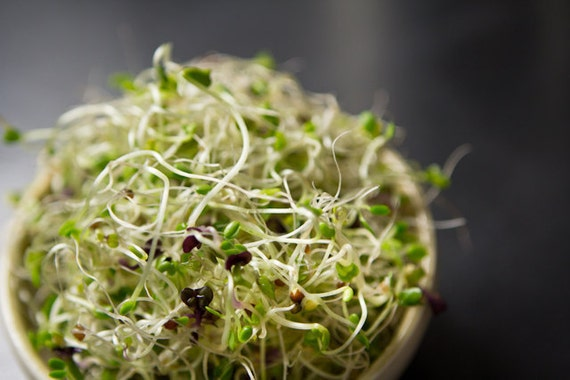 Sprouts - Cabbage Head Mix Organic Sprout Seeds - 4 oz.