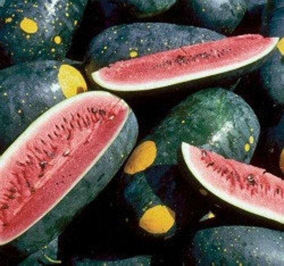 Organic Moon and Stars Watermelon Seeds