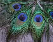 Embellish me Peacock - Peacock Feather Eyes (5)