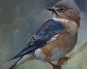 Female Bluebird - Original oil painting