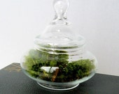 Vintage Tiny Apothecary Glass Terrarium with Moss