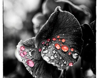 Colored Rain on a Black and White Flower