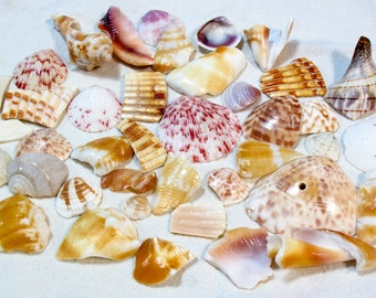 Colorful Almost Perfect Shells and Shell Pieces, Shell Shards - 4.6 oz.
