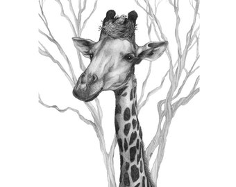 8x10 giclee print Giraffe with Bird pencil illustration