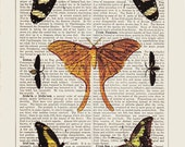 Orange butterfly art collection printed as dictionary art on antique dictionary page