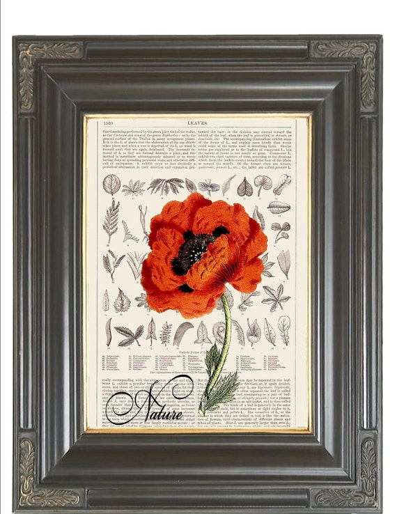 BOGO SALE Orange poppy Leaves Nature dictionary print art page printed on display page from old antique dictionary book page No. 204