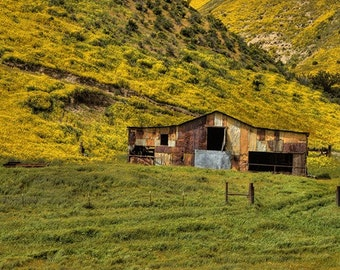 Country Photography Landscape Photography Old Barn Shed Spring decor Blooming Wildflowers green Wall Art Fine Art Photography Print