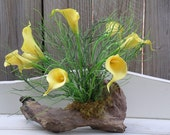 Real Feel Yellow Calla Lilies on Sealed Driftwood