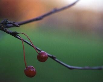 Cherry 5 x 7