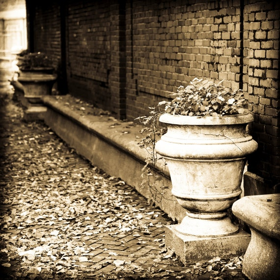 Autumn in Little Italy, Boston - Fine art photography - stone urn of flowers, ivy - peaceful moment - color or vintage sepia, 8x8, 8x10