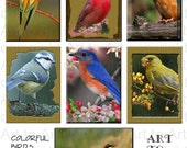 BIRDS COLORFUL (108) Digital Image Collage for crafts, scrapbooking,  cards, ATCs aCeOs you print