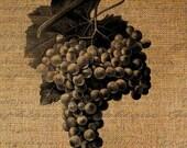 Gorgeous Grapes Wine Digital Image Download Sheet Transfer To Pillows Totes Tea Towels Burlap No. 1744