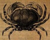 Crab Large Sea Life Beach Ocean Seashore Digital Image Download Transfer To Pillows Tote Tea Towels Burlap No. 1906