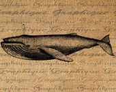 Hump Back Whale Digital Image Download Transfer To Pillows Totes Tea Towels Burlap No. 2038