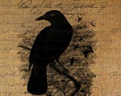 Crow Raven Collage Night Poem Script Calligraphy Digital Image Download Transfer To Pillows Tote Tea Towels Burlap No. 2165