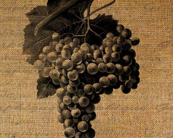 Gorgeous Grapes Wine Digital Image Download Sheet Transfer To Pillows Totes Tea Towels Burlap No. 1744