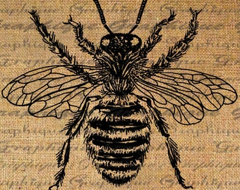 Large Bumble Bee Digital Image Download Sheet Transfer To Pillows Totes Tea Towels Burlap No. 2090
