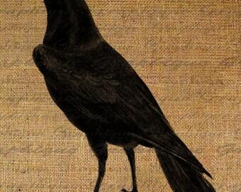 Halloween Digital Collage Sheet Black Birds Crow Raven Burlap Digital Download Fabric Transfer Iron On Pillows Tote Tea Towels 2176