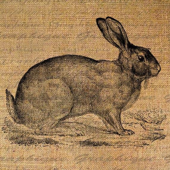 Pretty Rabbit Farm Animals Series Digital Image Download Pillows Tote Tea Towels Burlap No. 1636