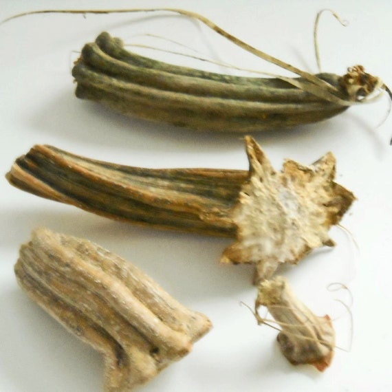 Dried natural pumpkin stems halloween and autumn by for Pumpkin stems for crafts