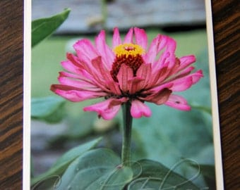 Blank Note Card, Floral Note Card, Note Card, Flowers, Garden, Wall Art, Floral Print, Flower Photography, Pink Flower, Fine Art Print, Gift