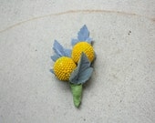 Billy Buttons Flowers Boutonnieres (Craspedia, Billy Balls)