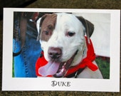 Duke - Donation to Animal Rescue