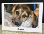 Roxanne - 100% to Animal Rescue