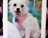 Juliet - Donation to Animal Rescue - Animal Rescue Greeting Card