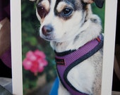 Timon - 100% Donation to Animal Charity - Rescue Dog Greeting Card