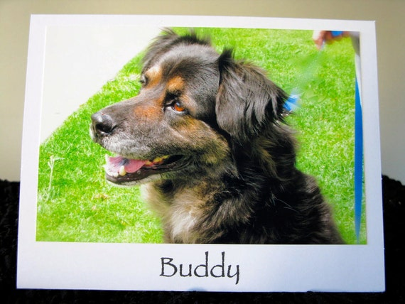 Buddy - Donation to Dog Rescue - Animal Rescue Greeting Card