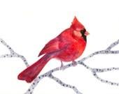 SALE ORIGINAL watercolor 10x8 cardinal on branch by TEVA