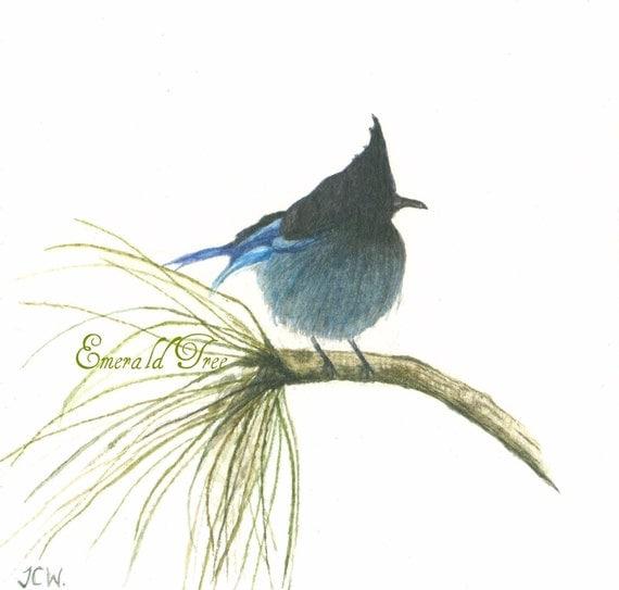Little Stellers Jay - Blue Bird Art