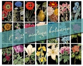 "Luscious Vintage Botanical Rectangles, 1"" x 2"", domino sized, digital collage sheet"