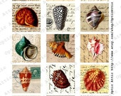 Seashells and Handwriting Vintage 2 x 2 Inch Square Instant Download Digital Collage Sheet OpticAttic 153