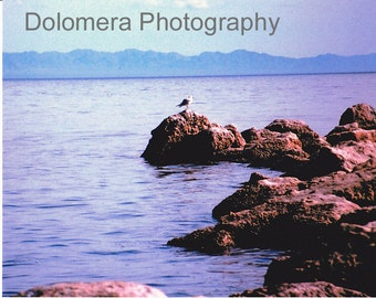 Nature Photograph, Seagull on the Rocks, Fine Art Photography, 5x7 or 8x10 Color Print, Salton Sea, California Desert, Bird, Wildlife, Gift