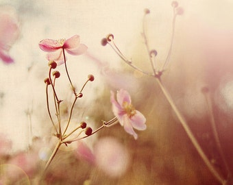 Nature Photography, Flower Photograph: illuminates Fine Art Photography Nature Wall Art Pink Japanese anemones Pink Flower artwork