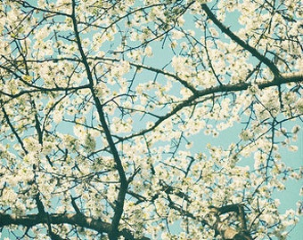 Nature Photography Tree Photo: Under the bluest sk Fine Art Photography turquoise nature wall art blue white art print, White Flowering tree