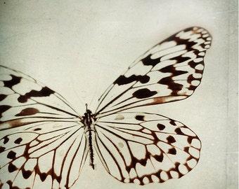 Still life Photography Butterfly Print: le papillon Fine Art Photography wall art decor Black and White Grey Photography Butterfly macro