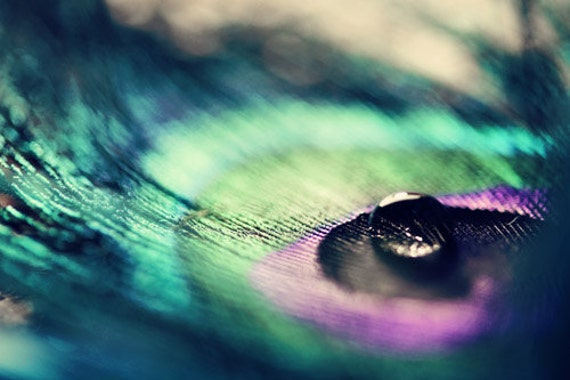 Peacock feather and water drop: Still Life Photography Iridescent Fine Art Macro Photography Teal Green Purple Home Decor Peacock print