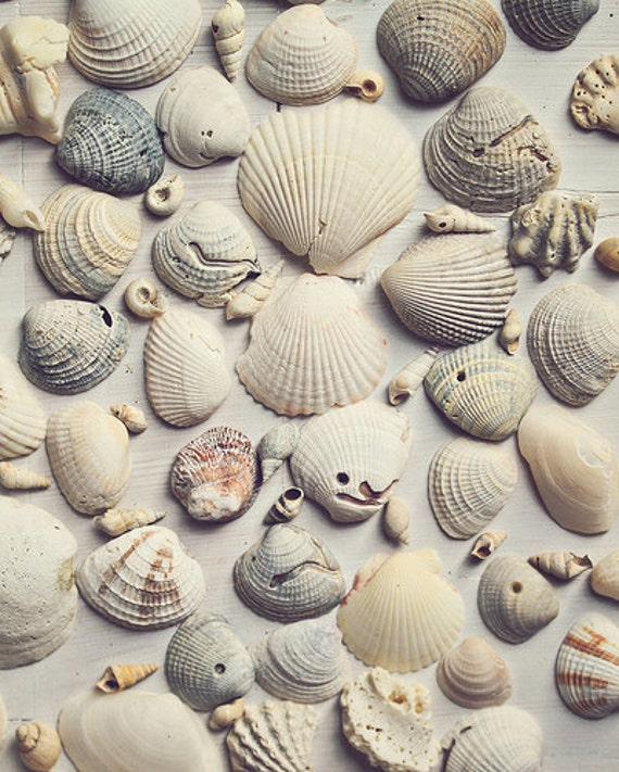 Sea Shells 8x10 fine art photography Bathroom by MarianneLoMonaco