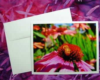 Echinacea Flower & Bee Card - Blank Inside