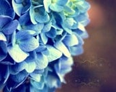 blue decor flower photography navy aqua brown black tan hydrangea / IN STOCK / 8x10 Fine Art Photograph / Dreams In Blue